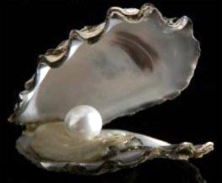 oysterwithwhitepearlphotobucket